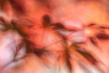 Japanse esdoorn abstract van Tania Perneel