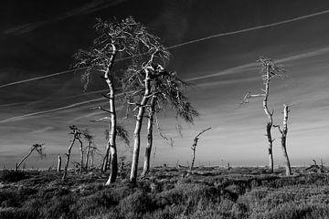 Hohes Venn in Schwarz und Weiß - 3 von Edwin van Wijk