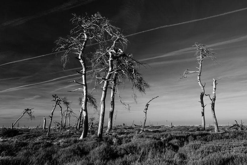 Hoge Venen in zwart-wit - 3 van Edwin van Wijk