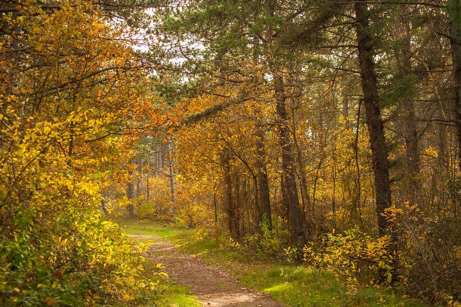Bospaadje in de herfst van Margreet Frowijn
