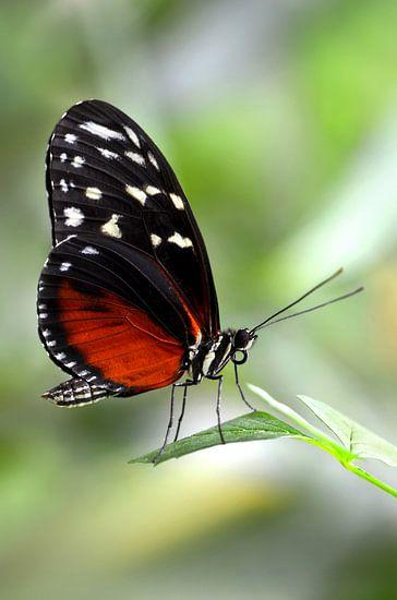 butterfly van Violetta Honkisz