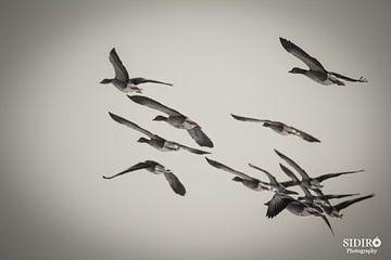 Vogels van Gabriella Sidiropoulos