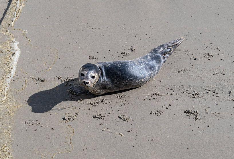 Zeehondje op het strand bij de Waddenzee van Ingrid Aanen