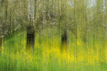 Fleurs jaunes dans un verger sur Patrick Verhoef