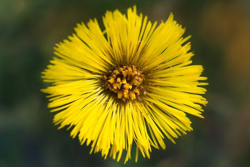 Gele bloem van Arjen Roos
