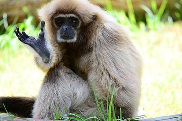 Zwaaiende aap heeft zijn dag van Quint Wijnhoven
