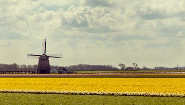 Oer hollands van Eelke Cooiman