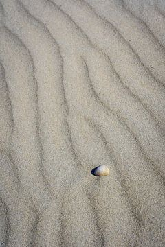 Schelp op het strand in het Noordzee zand van Dave Zuuring