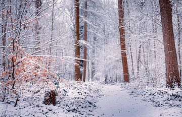 Love winter van Wim van D