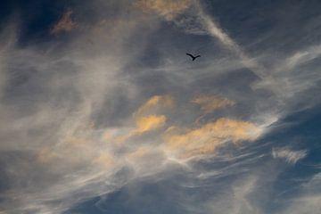 zeelucht met vogel silhouette - 1 van Arnoud Kunst