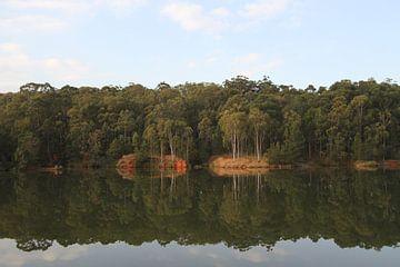 reflectie bomen sur Jeroen Meeuwsen