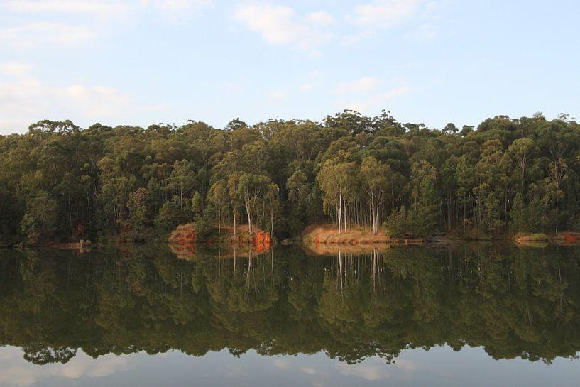 reflectie bomen van Jeroen Meeuwsen