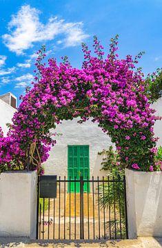 Arche de bougainvilliers fleuris à l'entrée d'une maison méditerranéenne sur Alex Winter