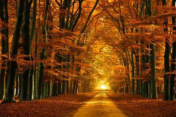 Magical Forest von Elly Besselink