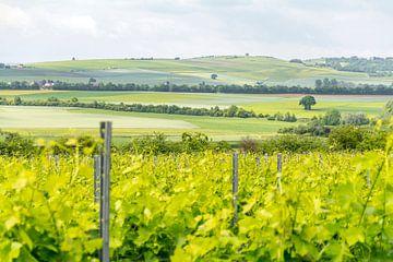 Wijnbouwgebied Rheinhessen in de lente van Achim Prill