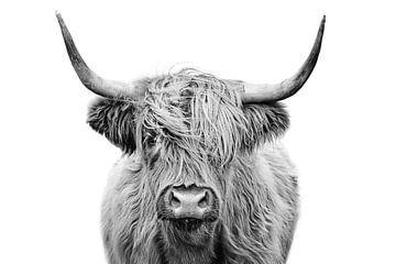 Schottischer Highlander in Schwarz und Weiß von Diana van Tankeren