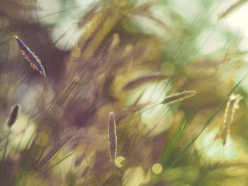 Grassen en licht 4 van Miriam Meijer, en plein campagne.....