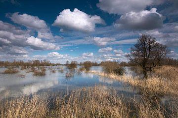Hochwasser im Ooijpolder von Cocky Anderson