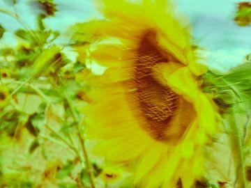 Sonnenblumen im Wind 5 von Andreas Gerhardt