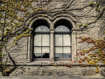 Fenster mit Kletterpflanzen vor einem verfallenen und baufälligen Schloss von Art By Dominic