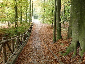 Park Sonsbeek in de herfst von Petra Dielman
