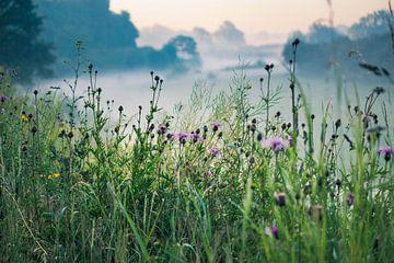 Blumen im Morgennebel von Iris Lobregt