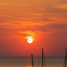 Les oiseaux migrateurs avant le coucher du soleil sur la mer sur Tilo Grellmann | Photography