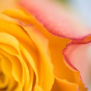 Van roos tot kunstwerk van