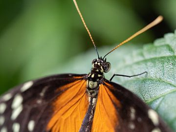 Vlinder op blad. van Mariëtte Plat