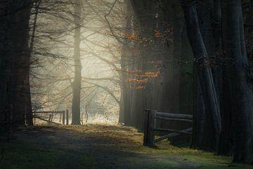 Herbststimmung im Wald von Erwin Stevens