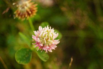 Blume von Michelle Fluks