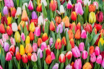 kleurrijke tulpen van eric van der eijk