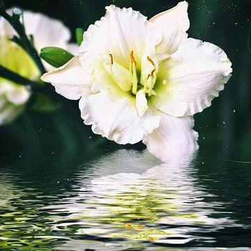 Wasserlilie van Christine Nöhmeier