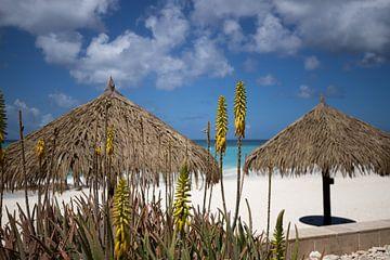 Aruba sur Joyce Perez
