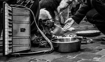 Welpe in Armut von Tim Briers