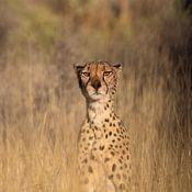 Sharing Wildlife photo de profil