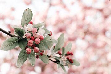 Tak met wit,rood en roze bloesem van Dennis  Georgiev