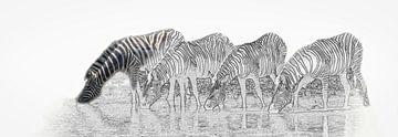 Trinken Zebras in Etosha National Park von Rietje Bulthuis
