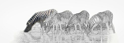 Drinkende zebra's in Etosha Nationaal Park