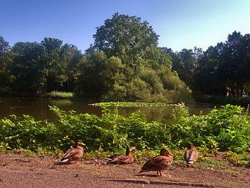 Die Entenfamilie von Edgar Schermaul