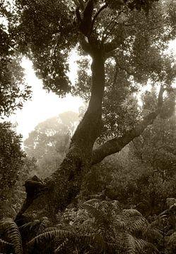 Ursprüngliche Natur von Andreas Kilian