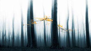 Speulder Wald