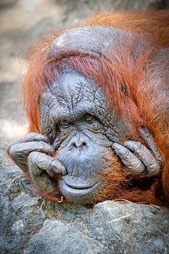 Borneose-Orang-Utan von Edwin Butter