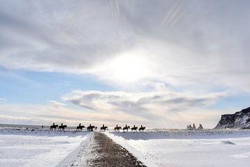 IJslandse Paarden van Roith Fotografie
