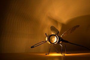 Stralende vlieg van Be-eR fotografeert