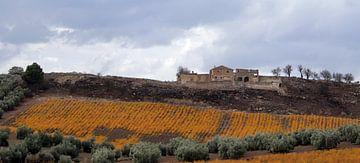 Oude boerderij met aspergeveld in herfstkleuren