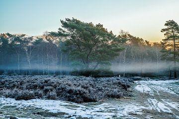 Baum im Nebel von Tim Annink