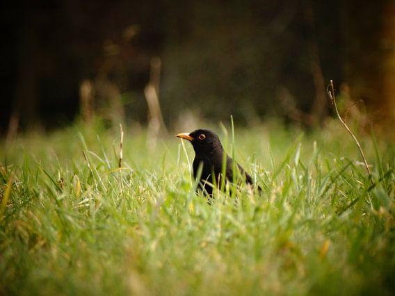 Merel de Vogel