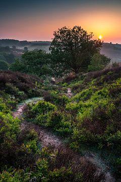 Zonsopgang boven Nationaal Park Veluwezoom van Martijn van Steenbergen
