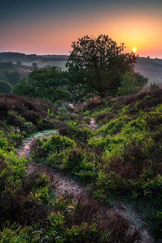Zonsopgang boven Nationaal Park Veluwezoom van